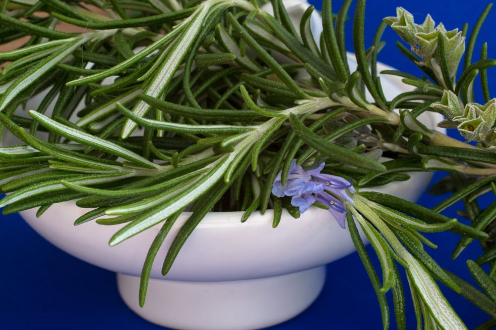 rosemary for cooking